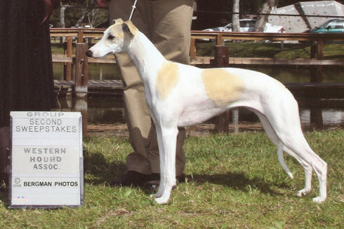 Ame, 2009 Western Hound Association Sweepstakes Group 2